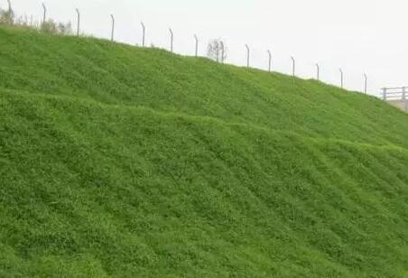 边坡绿化为什么要用竞技宝官网 绿化竞技宝官网的应用